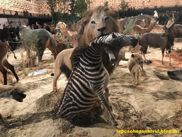 oroszlan_es_zebra.jpg