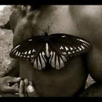 A világ legnagyobb pillangója: Alexandra-királyné csillangó