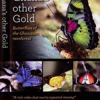 Ghána másfajta aranya: A ghánai esőerdők pillangói