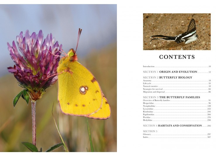 butterflies-of-the-world3.jpg