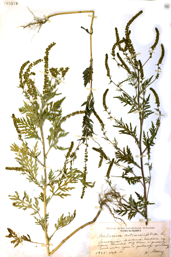 herbariumi_lapweb.jpg