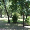 Jelentős mértékben járulhatnak hozzá a városi fák a levegőtisztaság javulásához