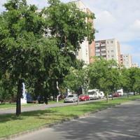 Rossz a lelkiismeretük Budapest közlekedéstervezőinek
