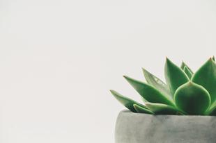 Hogyan mentsük meg növényünket önmagunktól?