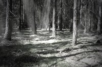 magical-forest-at-night-1343303.jpg