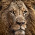 6 lecke, amit megtanulhatsz a dzsungel királyától!