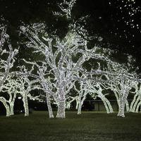 Elképesztő karácsonyi világítás ötlet, amelyet látnod kell!