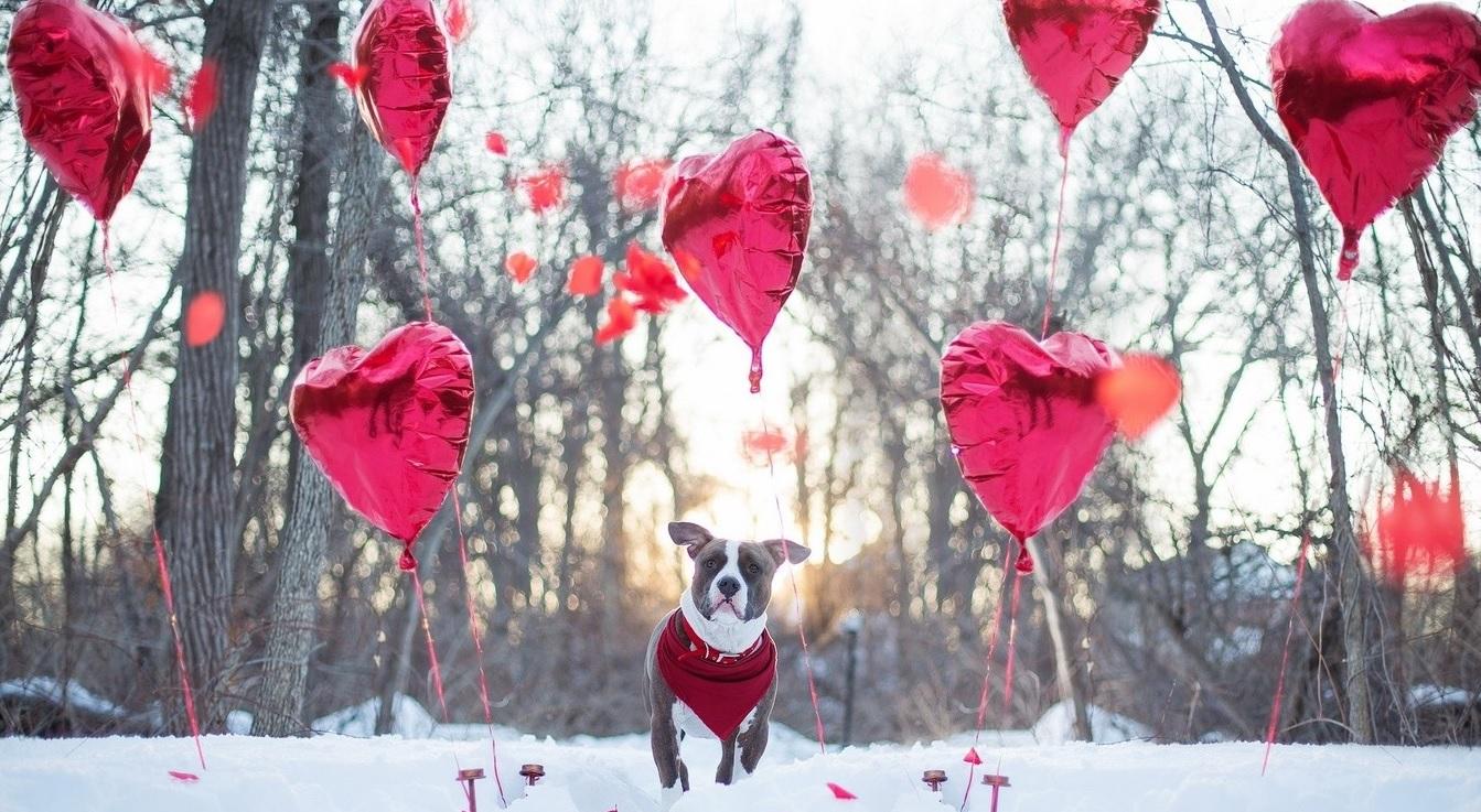 valentin_nap.jpg
