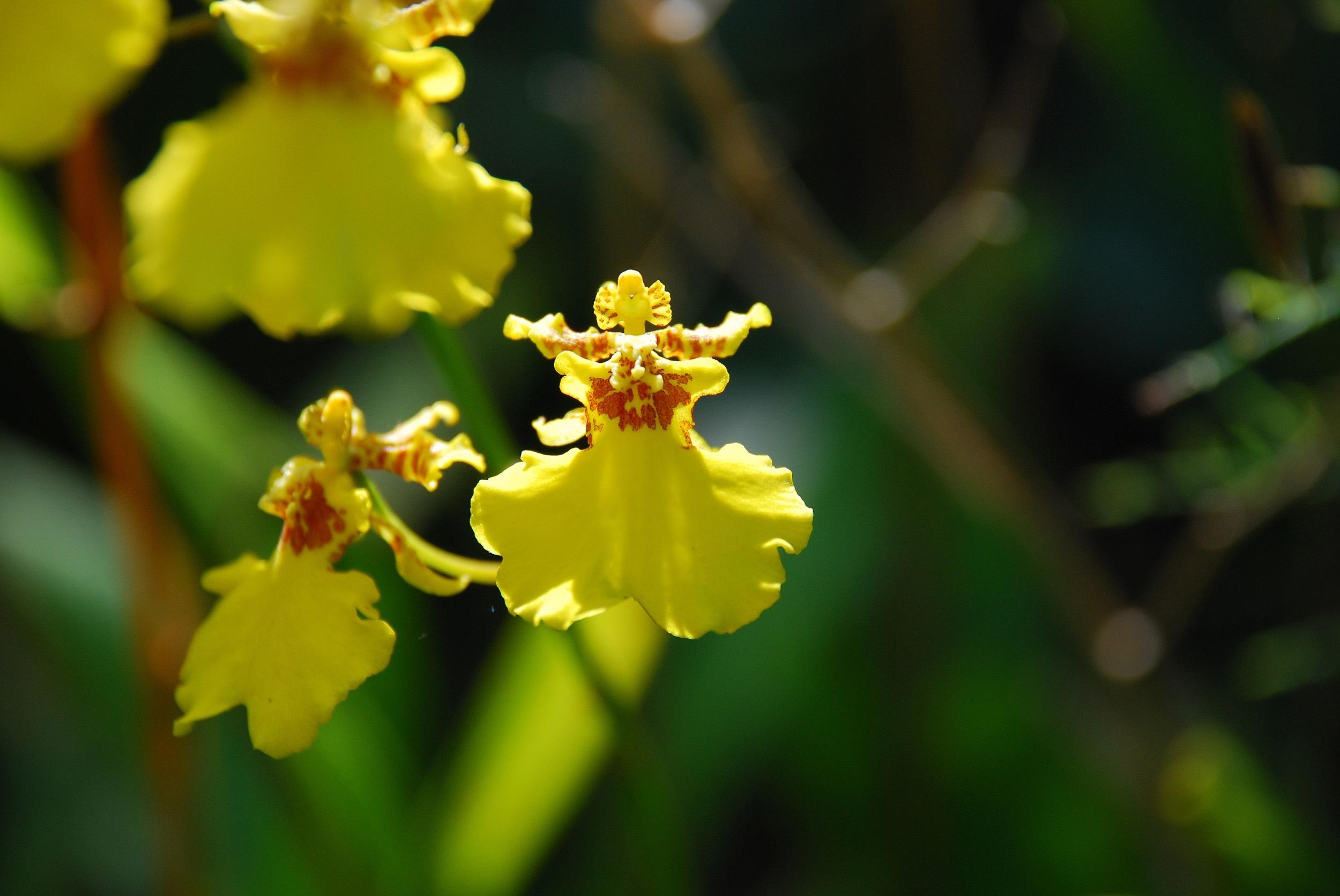 garden2017_orchidea2.jpg