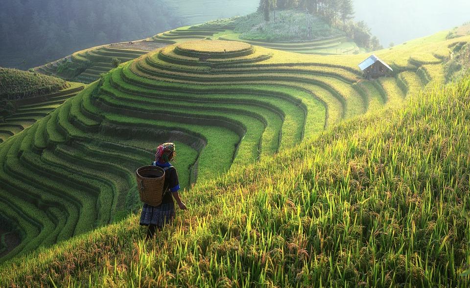 agriculture-1807576_960_720.jpg