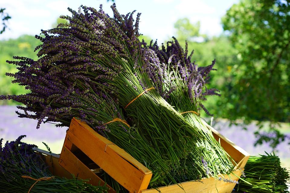 lavender-1595608_960_720.jpg