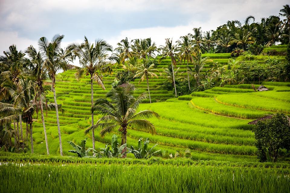 rice-1514141_960_720.jpg