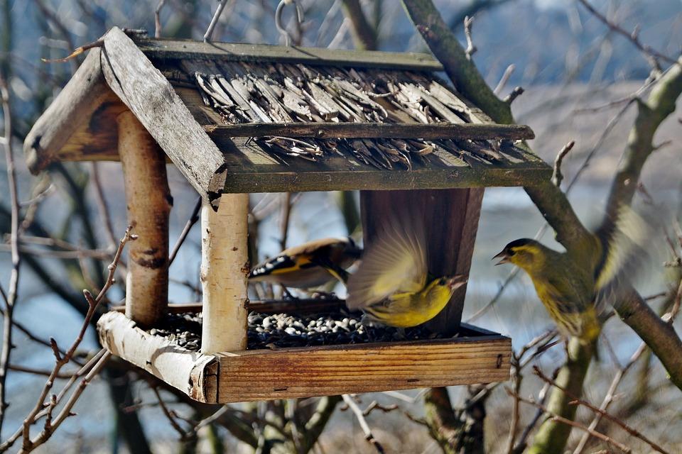 birds-664232_960_720.jpg