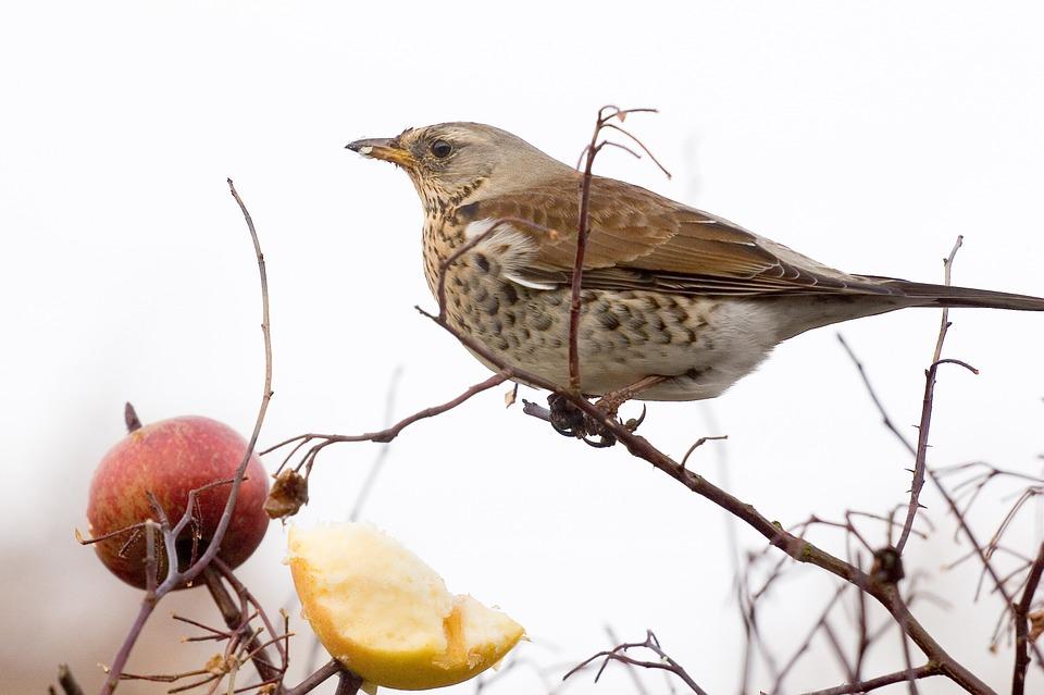 sparrow-635500_960_720.jpg