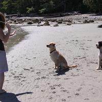 Négy tipp a vidám és kiegyensúlyozott kutya-gazdi játékért