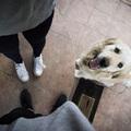 Egy abszolút kutyabarát honlap