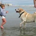 Négy tipp, hogy gyerek és kutya békében élhessen egymással