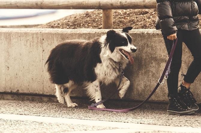 human-dog-cooperation.jpg