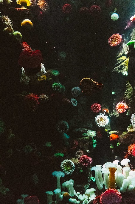 colorful-corals.jpg