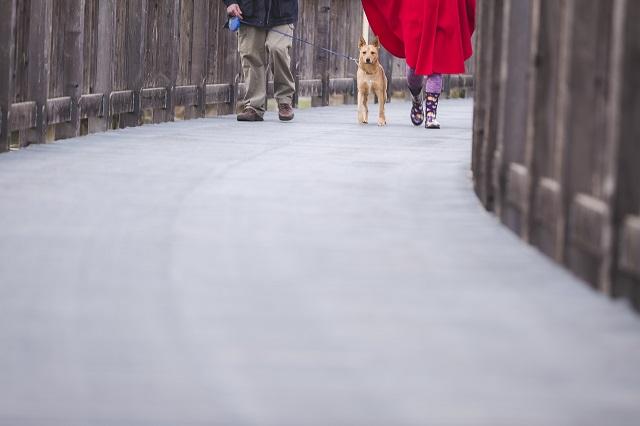 dog-walk.jpg