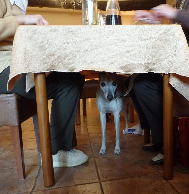 dog-in-restaurant.jpg