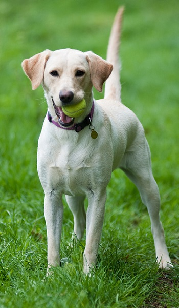 dog-with-a-ball-in-mouth.jpg