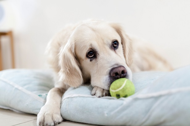 dog-with-tennis-ball.jpg