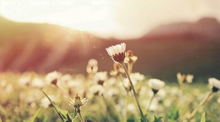 sunny-view.jpg