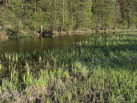 spring-waterside.jpg