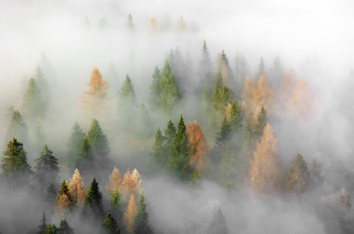 20140925-fog1.jpg