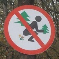 Az erdőben gombára szarni tilos !!!
