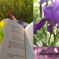 Bookworm Book Tag: Kérdések az olvasásról