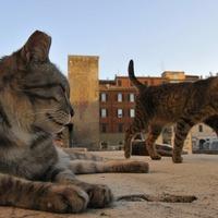 A római polgármester a macskák pártjára állt a művédőkkel szemben