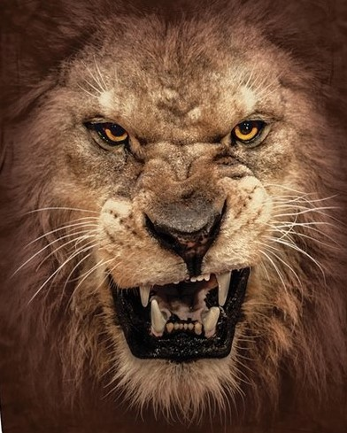 lion2blog.jpg