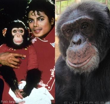 35698_jackson-csimpanz-bubble-sl-d0002571C096d972e18fb.jpg