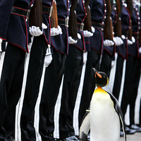 Sir Penguin the honorable knight of Norway
