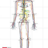 Jay's Anatomy