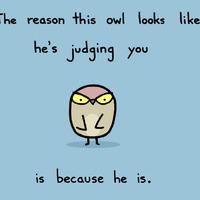 Judging MOFO