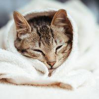 Annyira cuki! Az egyik amerikai márka cicákkal reklámoz