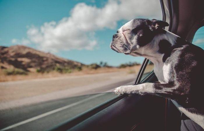 Így nyaralj kutyával!