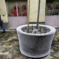 Város-zöldítés alibi fákkal?