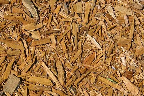 biomassza.jpg