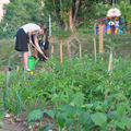 Az LMP szerint követendő példa a szentgotthárdi közösségi kert program