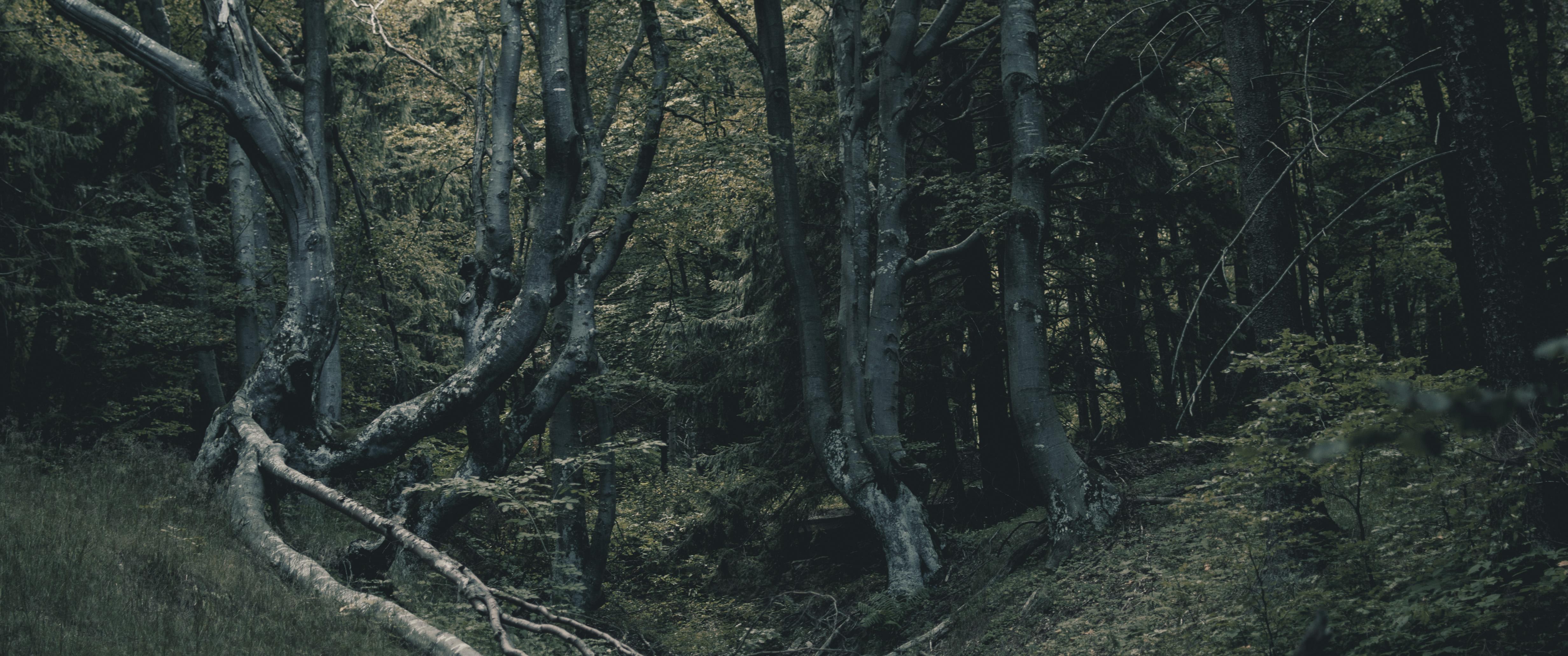 fura fák az egész hegyen