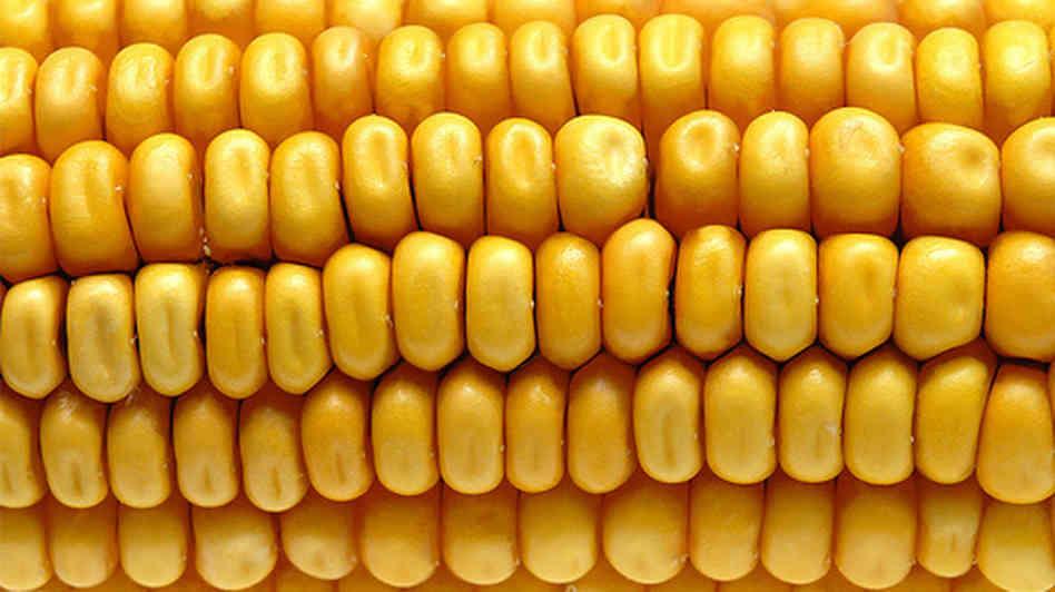 Sütve, főzve, grillezve - Így készítsd a kukoricát!