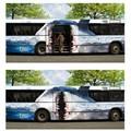 Király bus design