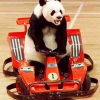 Panda vezet