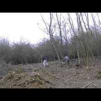 Óriási erdőírtások jönnek