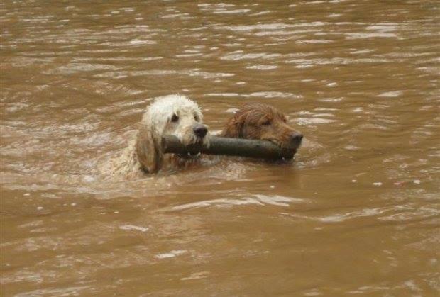 árvíz Boszniában 2014. május1.jpg