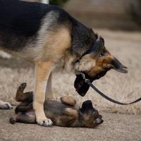"""""""Mások nevezzék csak gyöngeségnek az állatszeretetet, gúnyoljanak ezért – te sétálj csak nyugodtan a kutyáddal. Jó társaságban maradsz, s Isten is tudja ezt."""""""